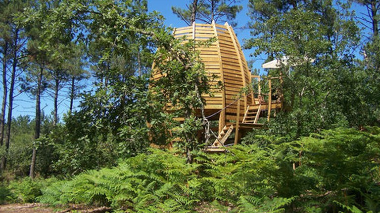 Stay in your own wonderful treehouse at no cost to the planet