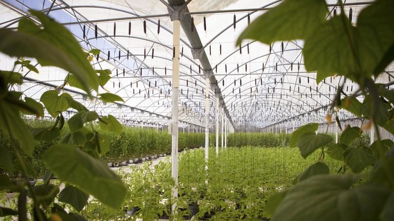 El Dorado Royale green house