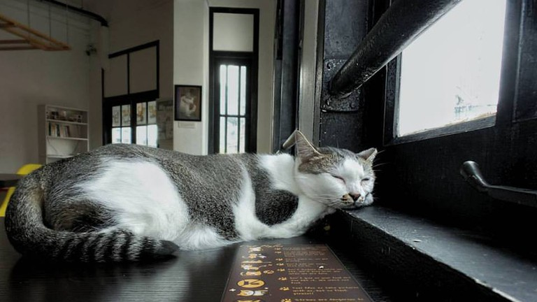 The Cat Cafe, Singapore