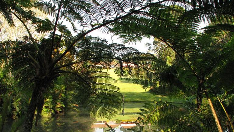 The gardens at Makaranga
