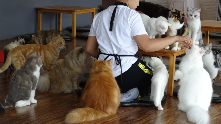 Feeding time at Cat 'n' A Cup Cat Cafe
