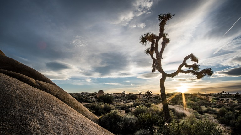 Joshua Tree National Park - California, United States - Travel photography