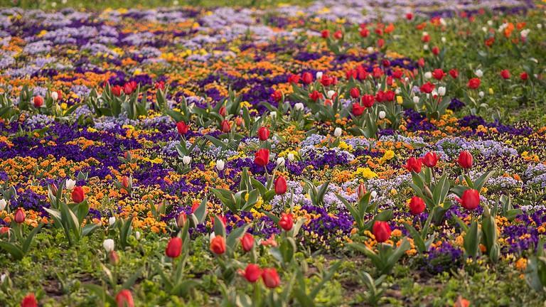 Flowers in Century Park Shanghai
