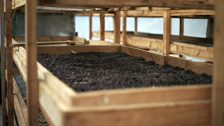 Coffee beans drying © Christopher Bowns