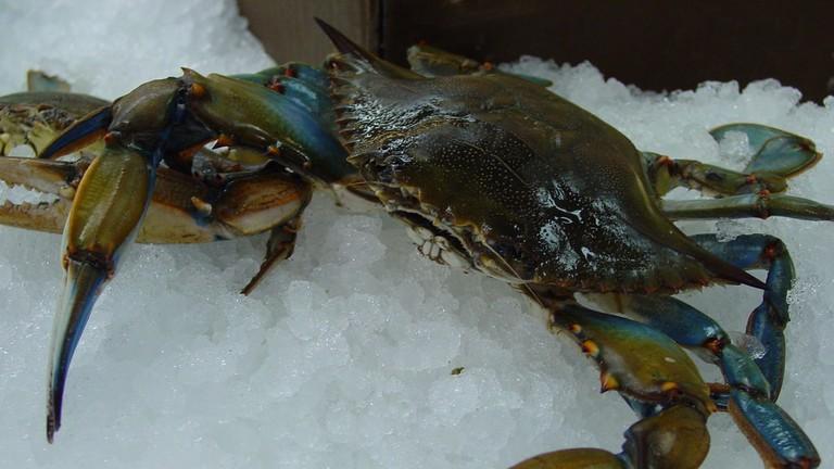 Maryland Blue Crab | © Tony Weeg Photography/Flickr