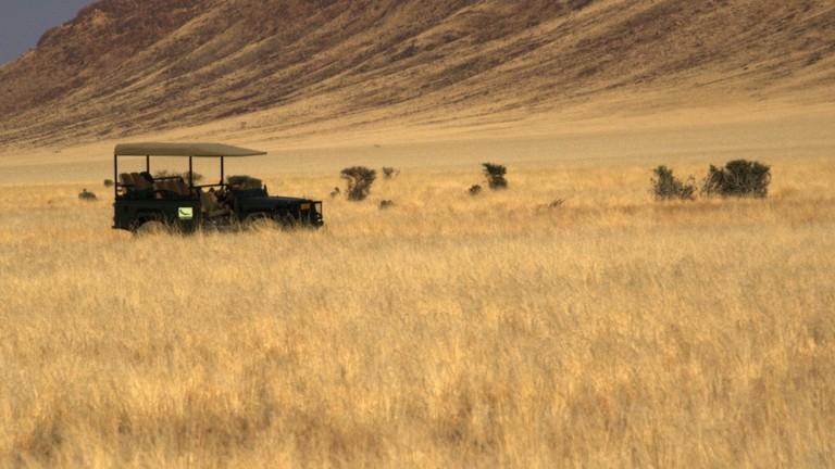 Safari drive