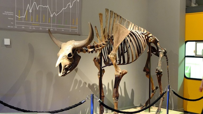A skeleton on display at the museum