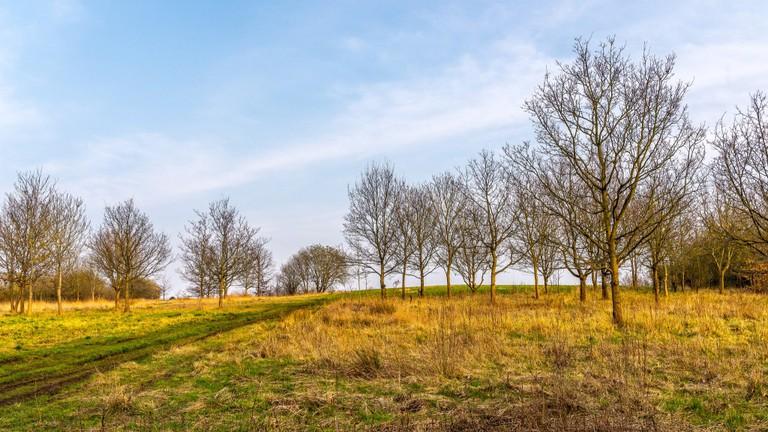 Sandwell Valley trees