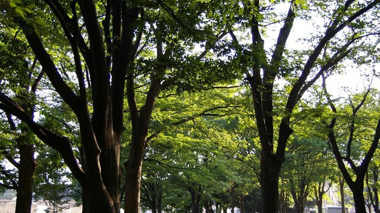 Early morning at Komazawa Park