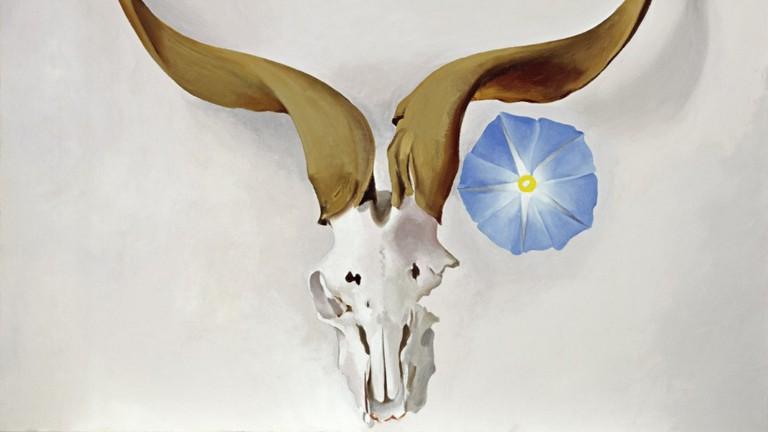 Ram's Head, Blue Morning Glory at GOMA
