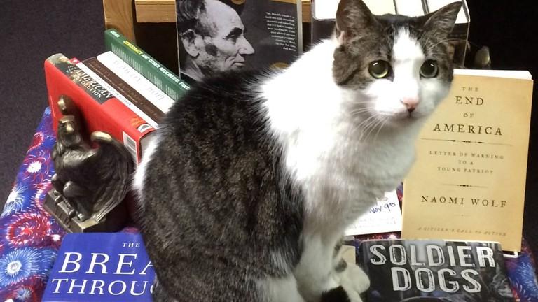 A Novel Idea Bookstore, Lincoln