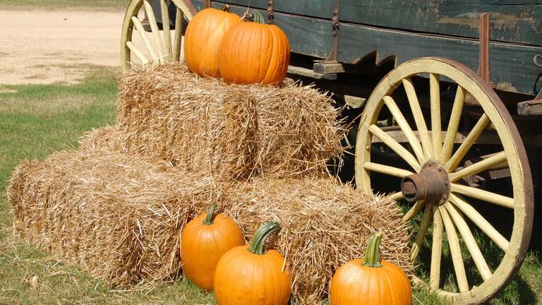 Pumpkins and hay bales