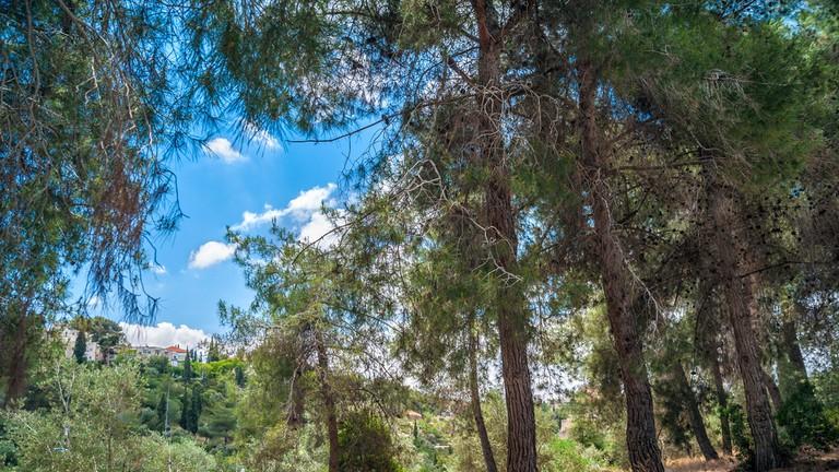 Gan Sacher, Jerusalem, Israel