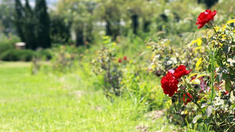 Wohl Rose Garden, Jerusalem, Israel