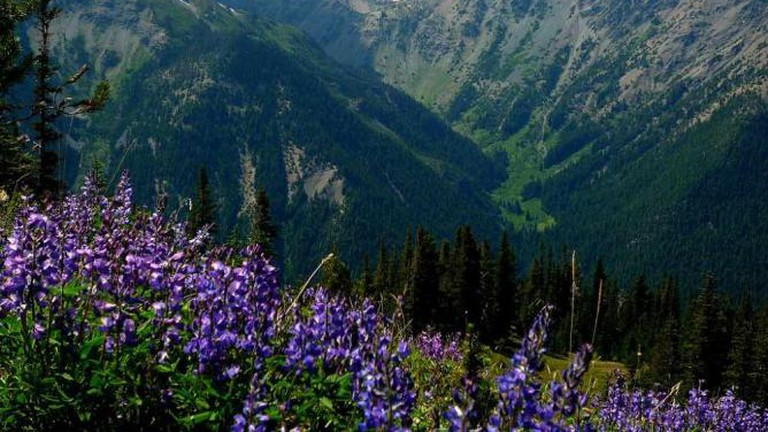 Marmot Pass, Olympic National Park