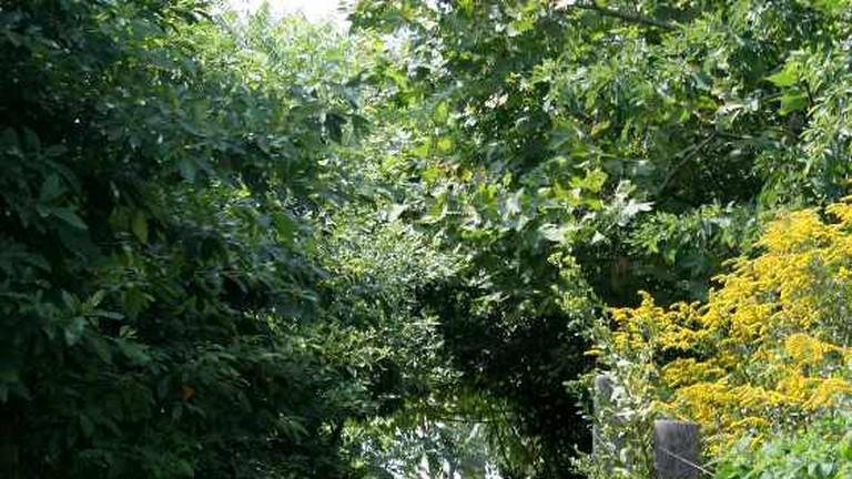 Greenery at Brooklyn Bridge Park