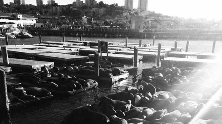 Sea lions sunbathing in the afternoon