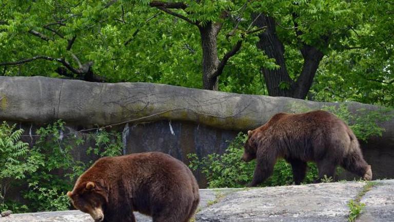 Bronx Zoo_2015 05 24_0132