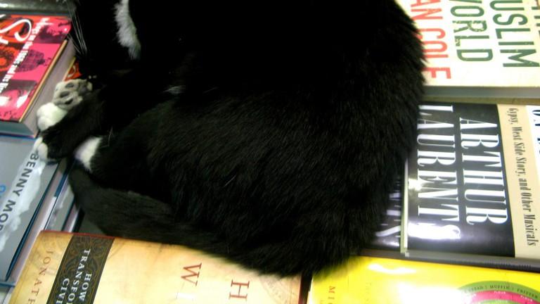 Bookish Cat