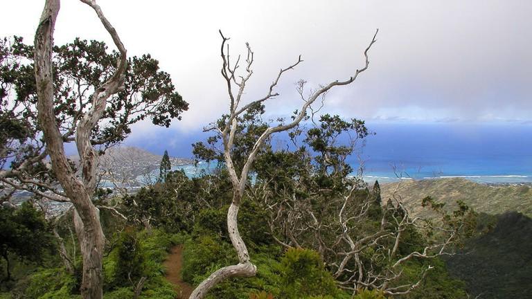 Kuli'ou'ou Ridge Trail   © Alan Levine/Flickr