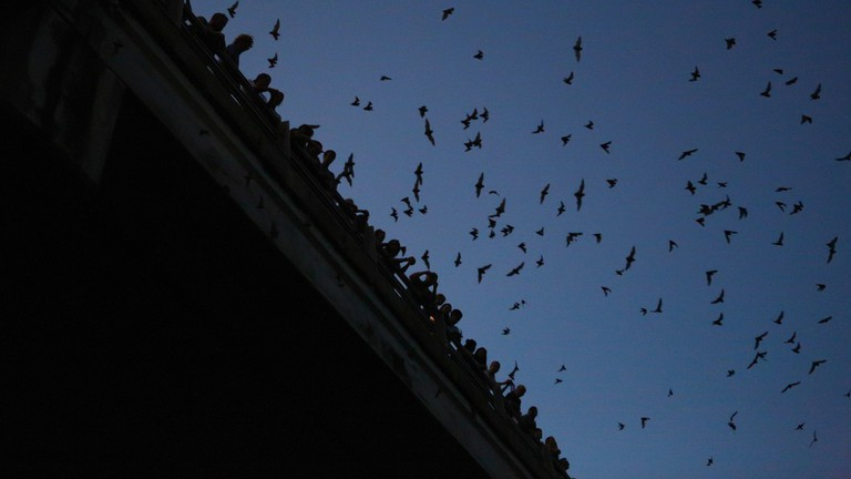 Congress Bridge Bats, Congress Ave