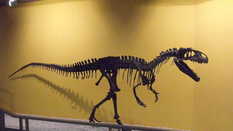 Dinousaur skeleton at the Natural Sciences Museum of Valencia
