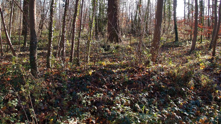 The Forest of Saint-Germain-en-Laye