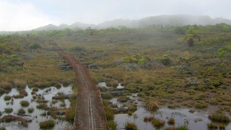 Alakai Swamp   © pfly/Flickr
