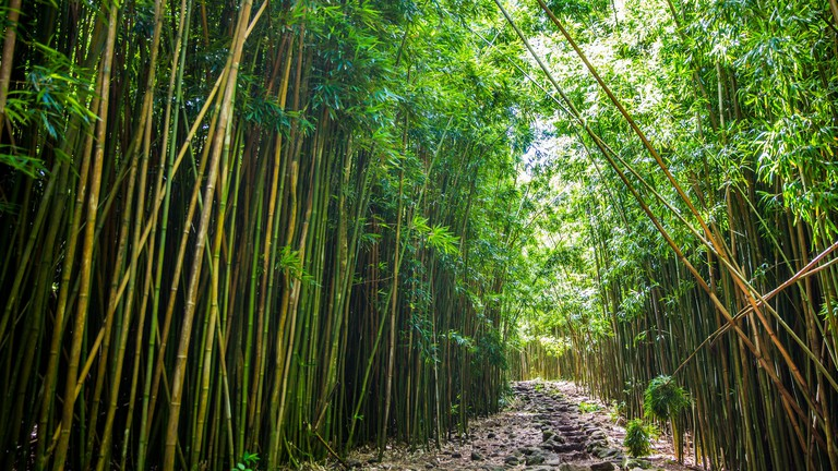Bamboo Forest   © Max Delaquis/Flickr