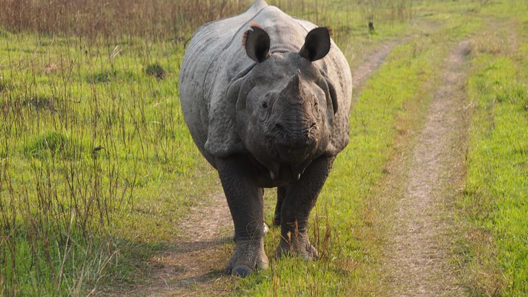 Face-to-face with a rhinoceros in Chitwan National Park