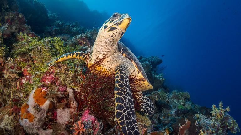 Wakatobi underwater beauty