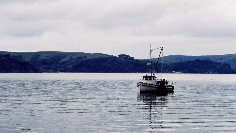 A quiet morning out on Tomales Bay