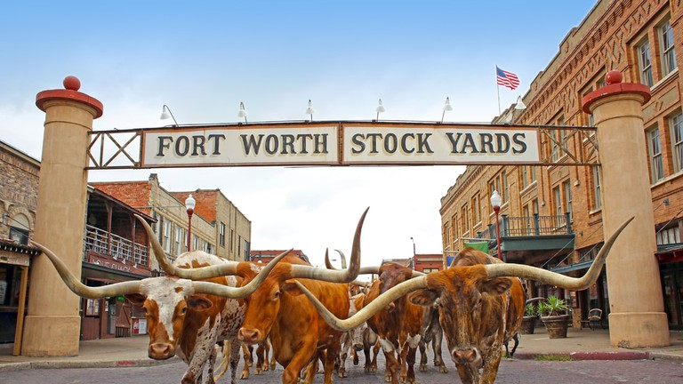 There are twice-daily longhorn cattle drives at the Fort Worth Stock Yards