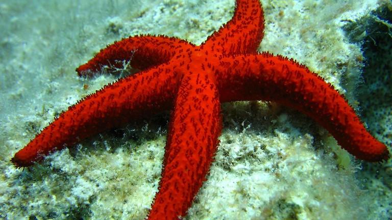 starfish-496836_1920