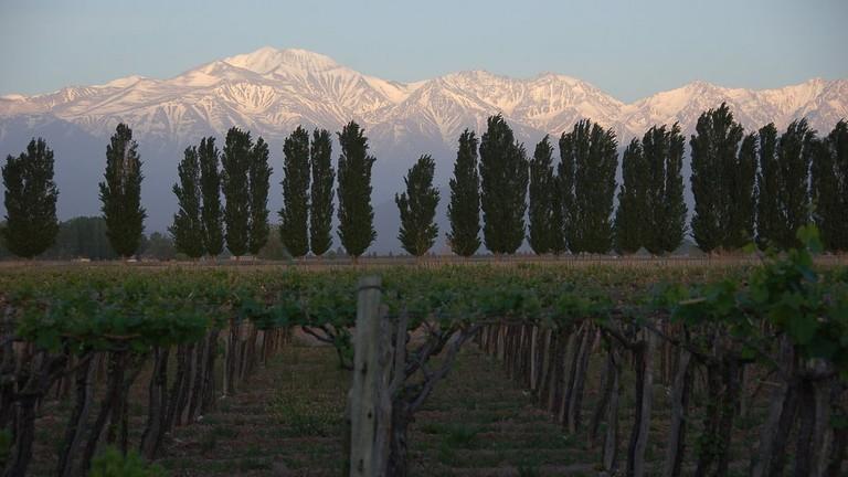 Mendoza's beautiful vineyards