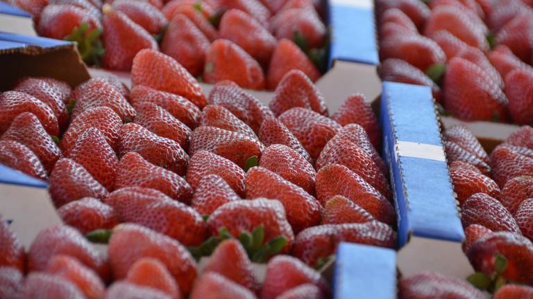 Fresh and ripe strawberries © Rob Bertholf
