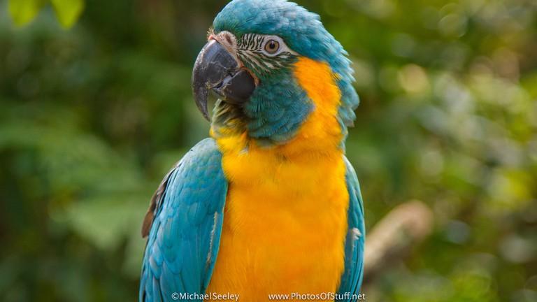 Birding Bolivia