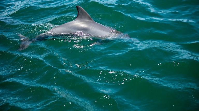 Bottlenose dolphin © airdomlopes2010 / Flickr