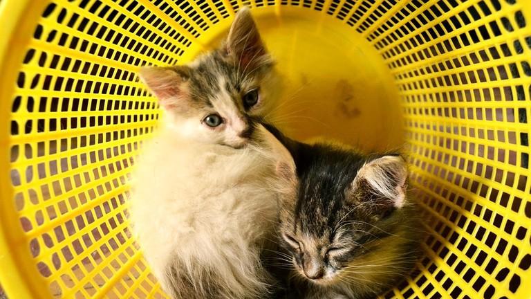 https://pixabay.com/en/cats-minima-babies-baby-dream-1357401/