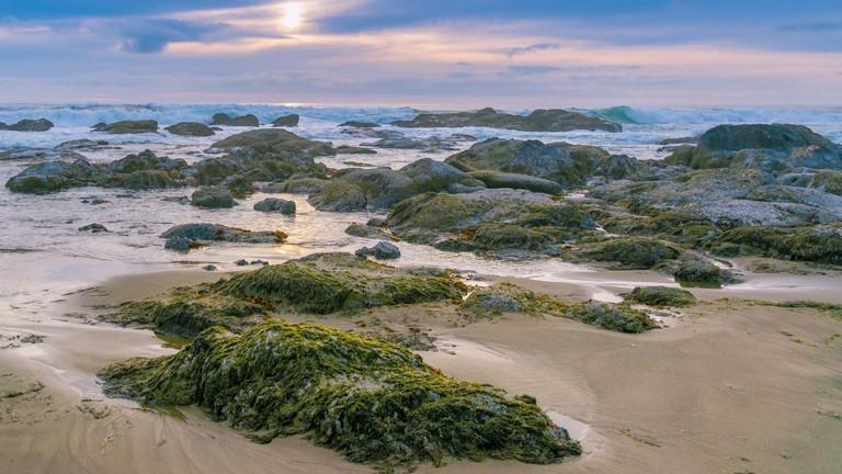 coho-oceanfront-lodge