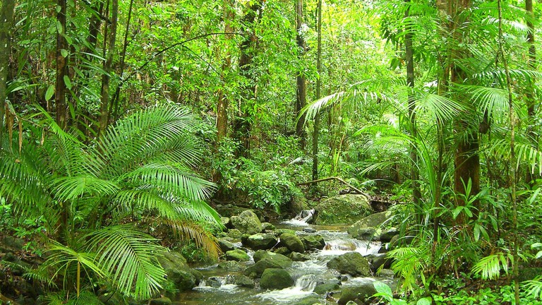 Daintree Rainforest © Master Man / Flickr