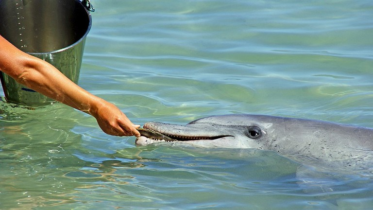 Feeding dolphins at Monkey Mia | © Andy Tootell / WikiCommons