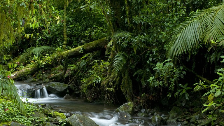 Stream at cloud forest, La Amistad international park.