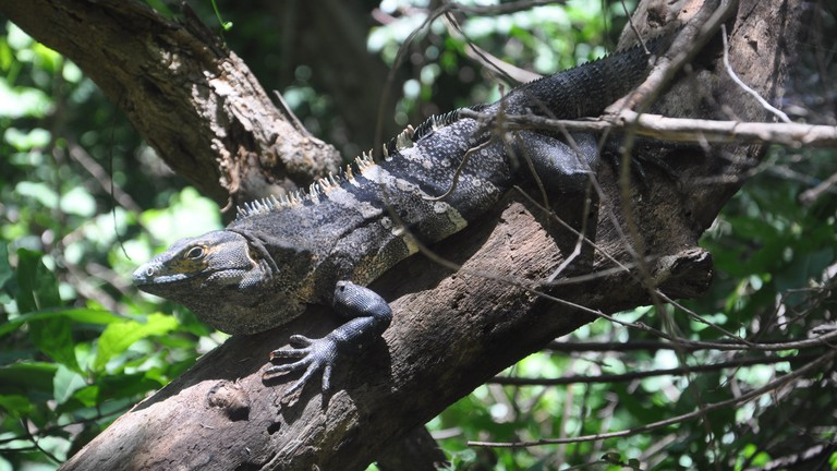 Wildlife of Barra Honda National Park in Costa Rica.