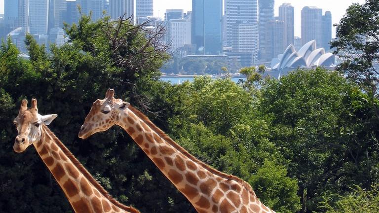 Taronga Zoo © Jan Derk / Wikimedia Commons