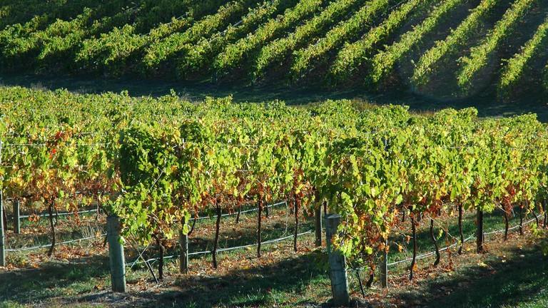 Vineyards in the Adelaide Hills © badjonni / Flickr