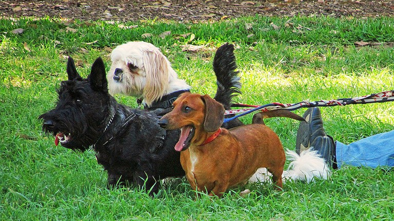 Dogs at the Camperdown Rest Memorial Park © Newtown graffiti / Flickr