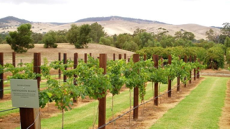 Jacob's Creek vineyard, Barossa Valley © Amanda Slater / Wikimedia Commons