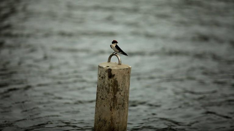 A bird observed at jabi lake during the Ramadan period
