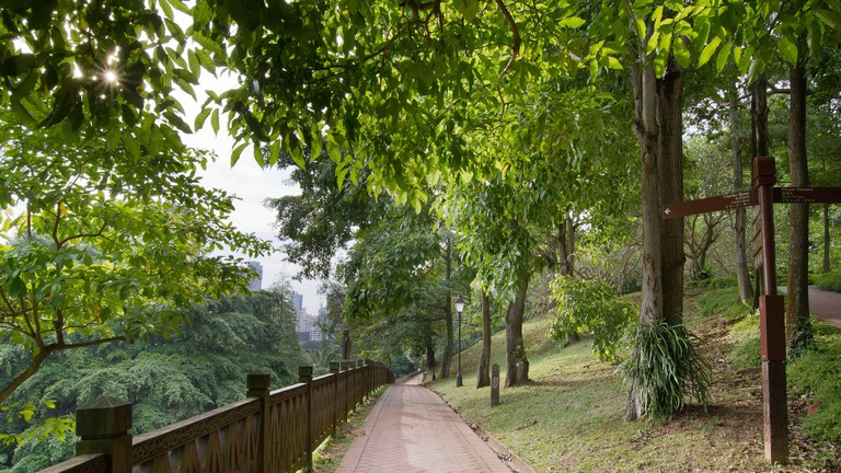 Century Walking Trail at Fort Canning Park in Singapore